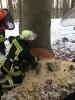 Sägefortbildung 8. Feuerwehrbereitschaft - 2. Zug